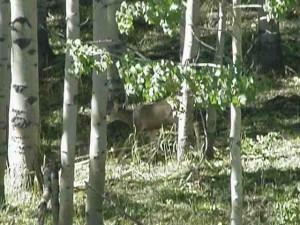 wildlife on ranch