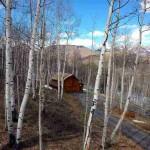 Barn spring view