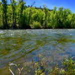 Gunnison Riverbanks Ranch – One of kind property on the Gunnison River – Private fishing access